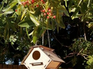 Birdhouse 2.8mm plywood